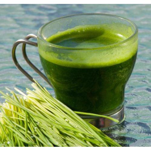 Chlorophyll Juice